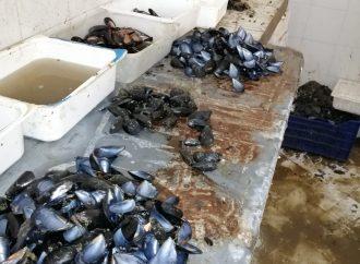 Taranto, sequestrata quasi mezza tonnellata di cozze abusive