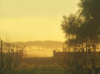 """Violini en plein air all'alba a Carosino <span class=""""dashicons dashicons-calendar""""></span>"""